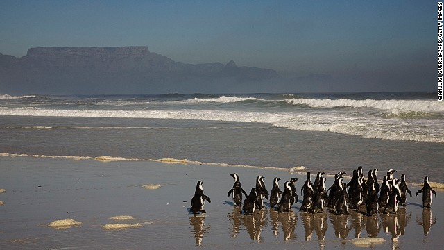 The tour offers plenty of photo opportunities, such as a visit to penguin and sea lion colonies.
