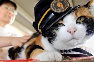 Tama la gata (Kinokawa, Wakayama, Japón)