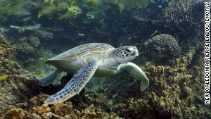 New Caledonia\'s rich coral creates habitat for an extraordinary number of marine species.