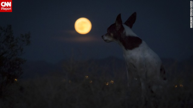 "<a href='http://ireport.cnn.com/docs/DOC-1152178'>Homer Liwag</a> and his dog Sake sat in the desert in Las Vegas, Nevada, waiting for the supermoon. ""This supermoon was striking as usual,"" he said."