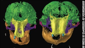 40,000-year-old mammoths get 3-D scans