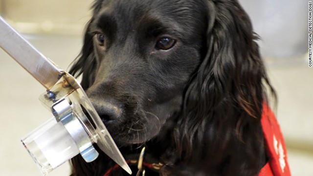 "Specially trained dogs have been reported to sniff out cancers in humans; scientists around the world are now trying to replicate that ability with ""electronic noses."""