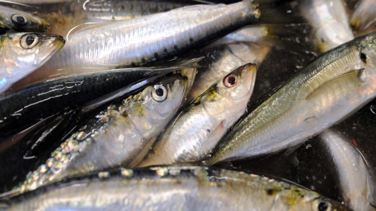 The healthiest fish to eat video for Safest fish to eat