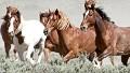 Save a horse, be a cowboy