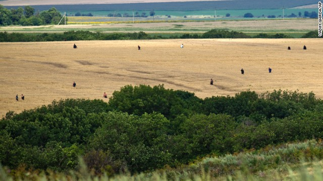 People search a wheat field for remains in the area of the crash site on July 20.