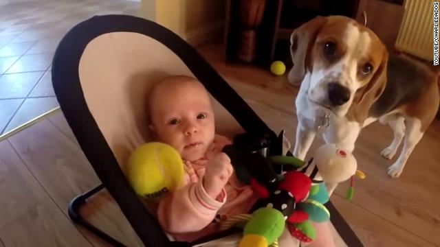 El video de la 'disculpa' de un perro con una bebé se vuelve viral