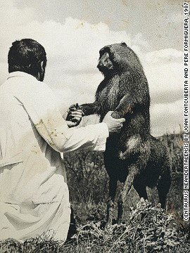 "In this picture of a ""four-legged baboon"", another curious creature to emerge from the archives of Ameisenhaufen."