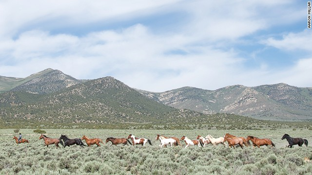 In the <a href='http://www.nps.gov/grba/planyourvisit/the-great-basin.htm' target='_blank'>Great Basin</a> of the United States, it's estimated that 40,000 mustangs still roam free.