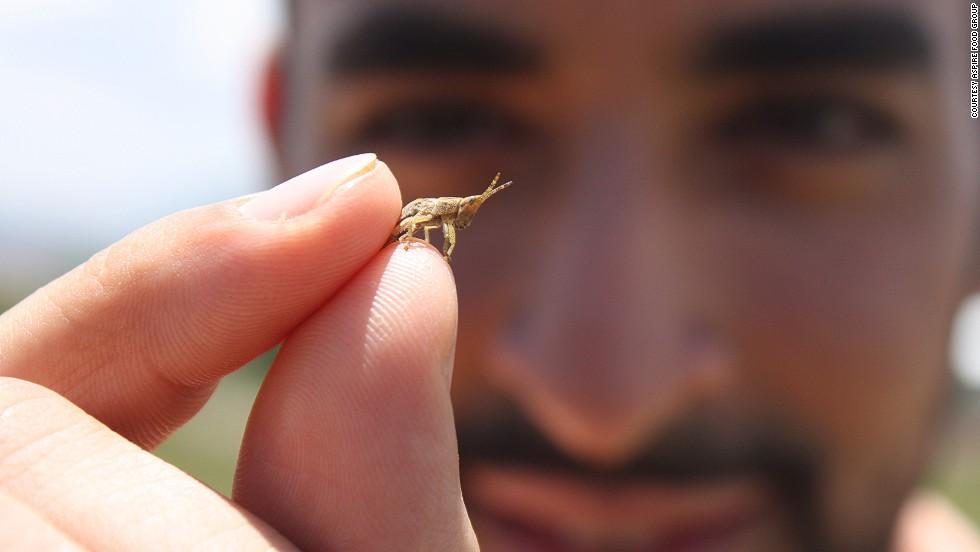 Salvando al mundo con insectos