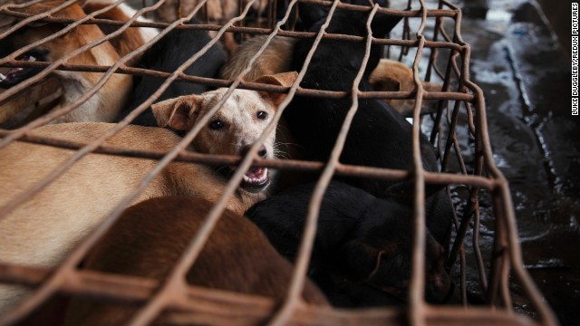 Luke Duggleby's images, featured on the CNN Photo Blog, take viewers inside Southeast Asia's illegal dog-meat trade.