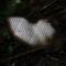 Las cartas de los pasajeros del MH17