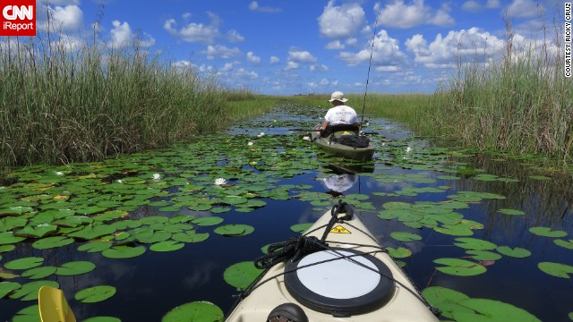 "The<a href='http://ireport.cnn.com/docs/DOC-1042379'> Arthur R. Marshall Loxahatchee National Wildlife Refuge</a> in South Florida comprises more than 145,000 acres of northern Everglades habitat. ""It's beautiful here, but full of alligators,"" said Ricky Cruz, who braved the wetlands with his kayak last summer."