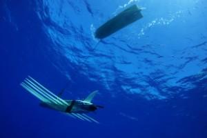 Drones subacuáticos abren nuevos mundos