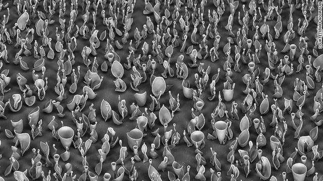 """When zooming in using an electron microscope, you see that inside the beaker a vast landscape of complex sculpted microstructures has evolved in which you can get completely lost,"" says Noordin. ""It really feels like you are diving in a sort of alien coral reef."""