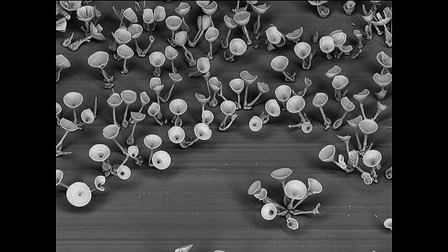 Microfabrication techniques that build objects at impossible small scale have seen tremendous gains over the last decade, but researchers are bumping up against limits at molecular and nanoscales.