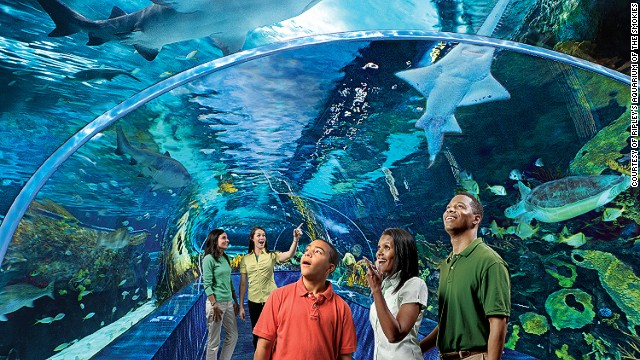 Number five on the TripAdvisor list of world aquariums, Ripley's Aquarium of the Smokies in Gatlinburg, Tennessee, features a 340-foot-long moving walkway beneath a lagoon containing turtles, stingrays and sharks.