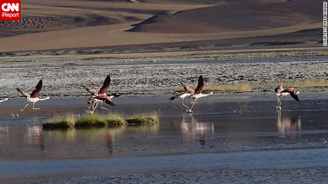 The sight of rare Andean flamingos convinced <a href='http://ireport.cnn.com/docs/DOC-1155762 '>Fred Knight</a> to get off his bicycle on the Sico Pass near the Argentina-Chile border.