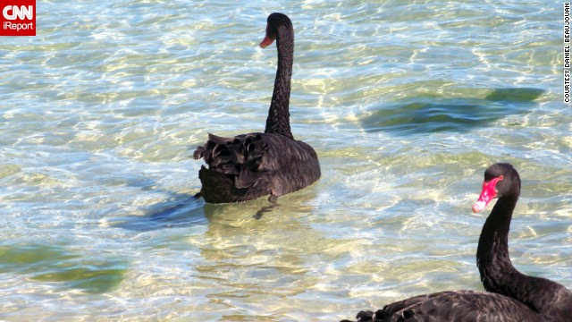 Daniel Beaujouan likes to visit Western Australia's <a href='http://ireport.cnn.com/docs/DOC-1151357'>Swan River</a> to relax after a long day at work in Fremantle. Visitors can spot the river's trademark black swans or even scuba dive at its deepest point.