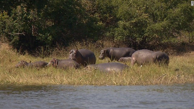 "Though not as famous for its safaris as nearby Zambia and Tanzania, Malawi is still a great place to spot the ""big five."""