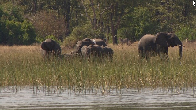 Liwonde National Park alone houses around 2,000 hippos and 500 elephants, plus 360 species of birds.