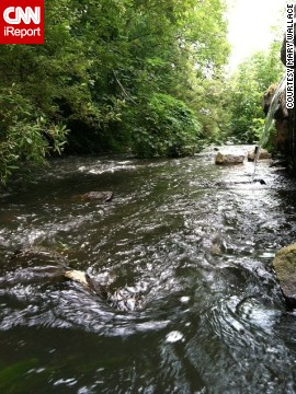"Mary Wallace worries about the well-being of <a href='http://ireport.cnn.com/docs/DOC-1158861'>Town Brook</a>, a 1.5-mile stream in Plymouth, Massachusetts. When dams were built in the 1790s, the number of migrating fish decreased, according to <a href='http://www.greateratlantic.fisheries.noaa.gov/mediacenter/2014/noaatownbrook.pdf' target='_blank'>NOAA</a>. ""Town Brook is a great story of a waterway gone bad and restored to its original state,"" she said. ""Industry dammed the water and prevented fish from entering Billington Sea. Now with the removal of dams, fish are returning and thriving."""