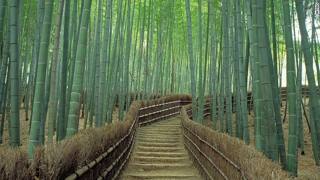 Kyoto, Japan's Sagano Bamboo Forest is often featured on website lists highlighting the most beautiful woodlands in the world.