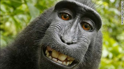 Selfie stirs up monkey business