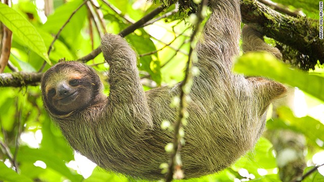With a small boat cruise less then an hour from Panama City, it's possible to see capuchin monkeys, three-toed sloths and crocodiles.