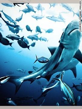 Un fotógrafo que bucea sin protección te pone frente a frente con los tiburones