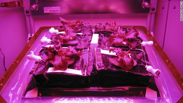 "<a href='http://www.nasa.gov/mission_pages/station/research/experiments/863.html' target='_blank'>""Veggie,"" a plant growth chamber, was sent up to the space station</a> in July. The experiment hopes to grow red romaine lettuce inside the ""Veggie flight pillow"" so that fresh salad can be grown or even recreated on longer missions. Earthbound experiments prior to launch at Kennedy's Space Life Sciences Lab showed off a <a href='http://www.nasa.gov/mission_pages/station/research/news/veggie/#.U-t2yfldV8E' target='_blank'>successful crop of lettuce and radishes. </a>"