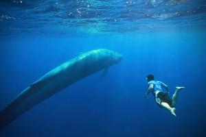 Nadar con ballenas azules (Sri Lanka)
