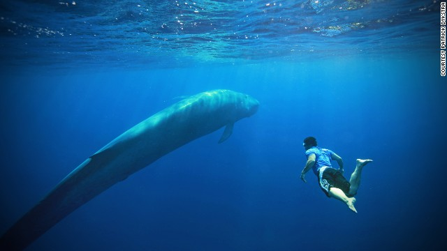 89631d7cdd3 140815122240-exceptional-experiences-world-sri-lanka-blue-whale-story-top.jpg