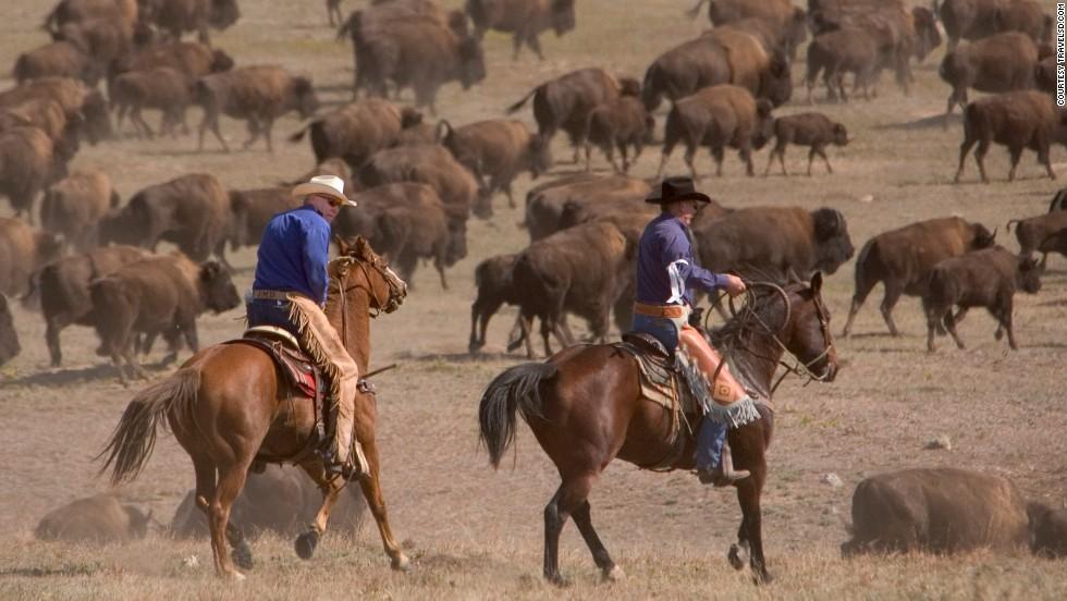 Rodeo de búfalos (Dakota del Sur)
