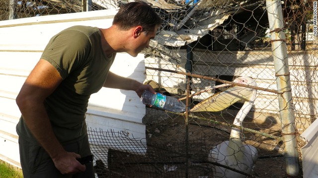 Pleitgen gives a pelican some water. The zoo's staff cannot afford to buy fish to feed it.