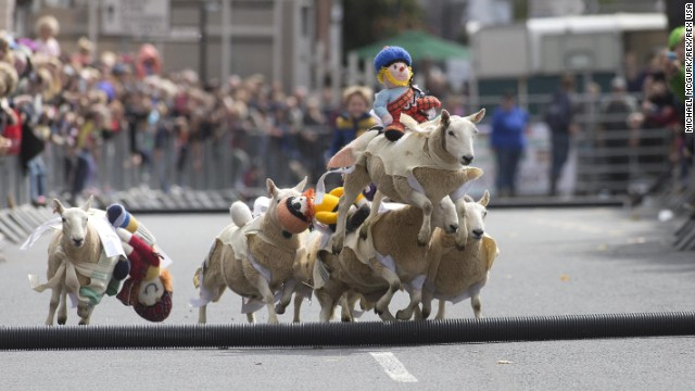 Sheep race in the streets of Moffat, Scotland, during the third annual Moffat Sheep Races on Sunday, August 17. Woolen jockeys are placed on the sheep for the race, which celebrates the town's wool industry.