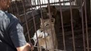 Animales agonizan en el zoo de Gaza
