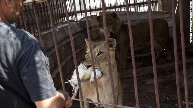 Animales atrapados entre el fuego cruzado en el zoo de Gaza