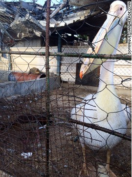 The CNN crew found a duck, a pelican and a crocodile sharing a cage at the zoo.