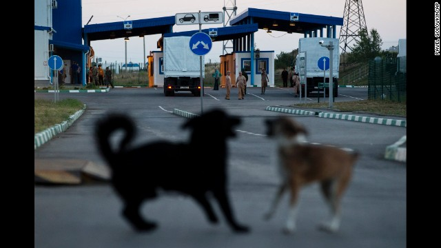 Dogs play together as a Russian convoy carrying aid supplies stops at a border control point with Ukraine, in the Russian town of Donetsk, on August 20.