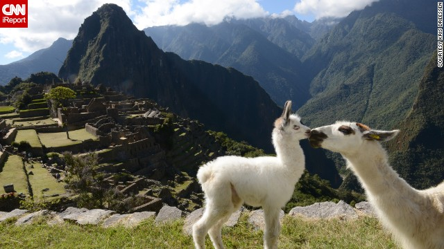 World traveler Kris Dreessen captured this tender moment between two llamas during a visit to <a href='http://ireport.cnn.com/docs/DOC-1148796'>Machu Picchu</a> in June. The iconic mountain ruins are a popular destination for tourists.