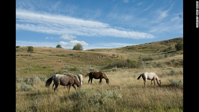 Because North Dakota's Theodore Roosevelt National Park manages a herd of about 100 feral horses, visitors can experience the badlands as it was when Theodore Roosevelt visited for the first time in 1883.