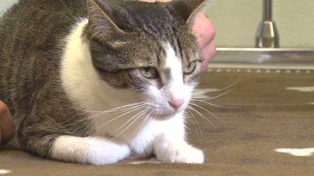 Pet dialysis helps sick animals
