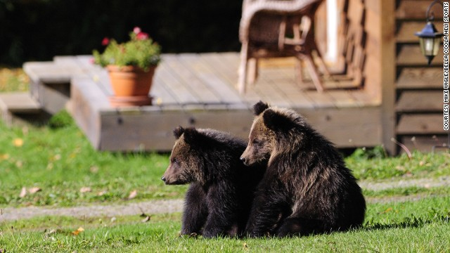 Professional guides can help you track down grizzlies in the valley. But if you're really lucky, the bears come to you at Tweedsmuir Park Lodge.