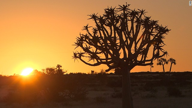 Most treks make a stopover in the Quiver Tree Forest, 124 miles outside Fish River Canyon. The quiver tree (pictured) is a unique species of aloe that only grows in southern Namibia.