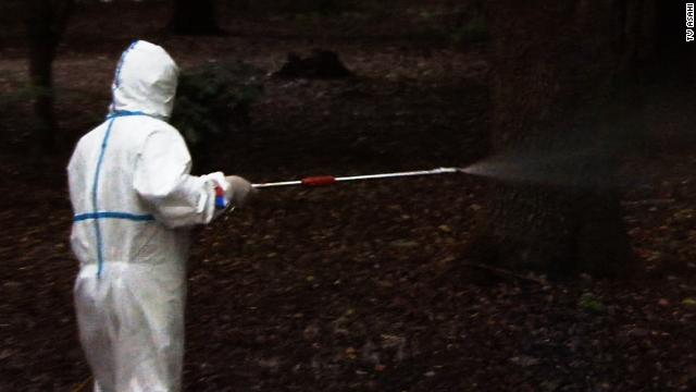 Un raro brote de dengue afecta a Tokio