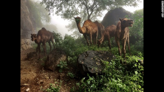 "OMAN: ""The camels are grazing in the mountains west of Salalah, around 20 kilometers from Oman's border with Yemen. This entire area along the coast turns green with the seasonal monsoon."" - CNN's Jon Jensen, September 6. Follow Jon (<a href='http://instagram.com/jonjensencnn' target='_blank'>@jonjensencnn</a>) & the CNNIME team along on Instagram at <a href='http://instagram.com/cnnime' target='_blank'>instagram.com/cnnime</a> for more!"