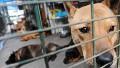 Chinese city kills 5,000 dogs
