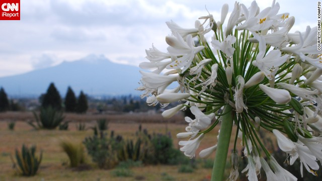 A bundle of white flowers blooms in the state of Tlaxcala, Mexico, with the inactive La Malinche volcano looming in the background.