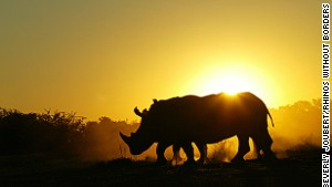 Why rhinos are leaving South Africa