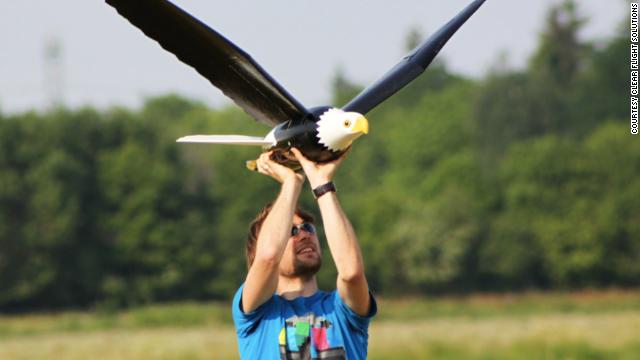 The bigger Bald Eagle robird.